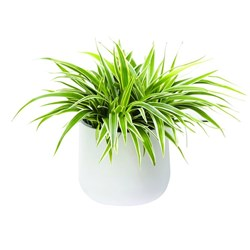 Urban Lines Okidome Suction Planter