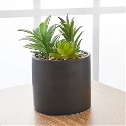 Alex Liddy Faux Potted Succulent Plants Black