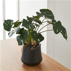 Alex Liddy Faux Monstera Plant 41cm