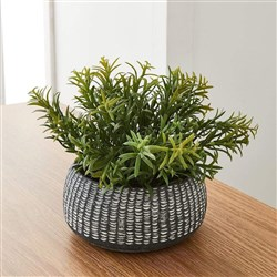 Alex Liddy Faux Sedium Round Planter