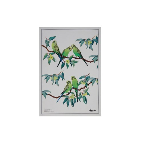 Maxwell  Williams Birdsong Tea Towel 50x70cm Budgerigar