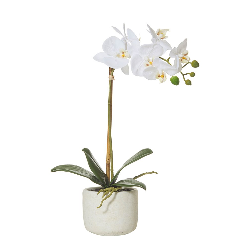 Rogue Buttlerfly Orchid-Smooth Pot 25 x 10 x 45cm White