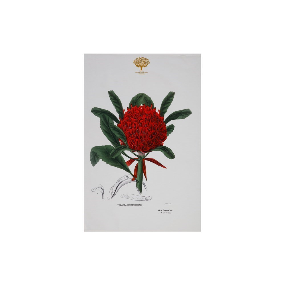 Maxwell & Williams Royal Botanic Garden Tea Towel 50x70cm Telopea